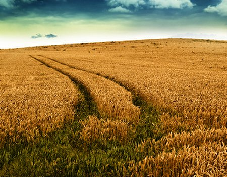 Gluten intolerance, IBS and the trouble with wheat